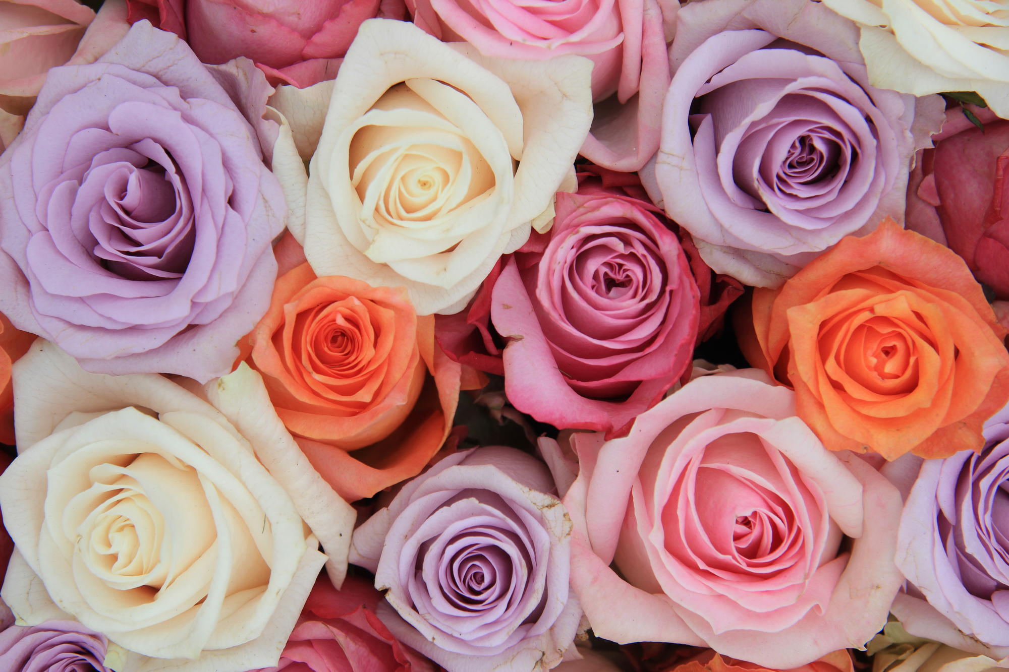 cutler bay florist blooming gardens flower delivery